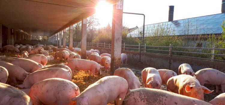 Noch mehr Tierwohl in Hüttinghausen